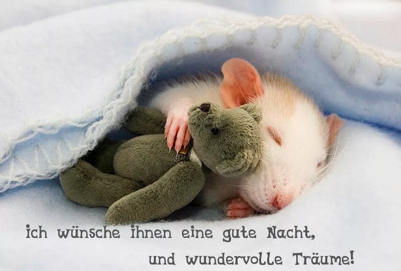 Gute nacht wünschen